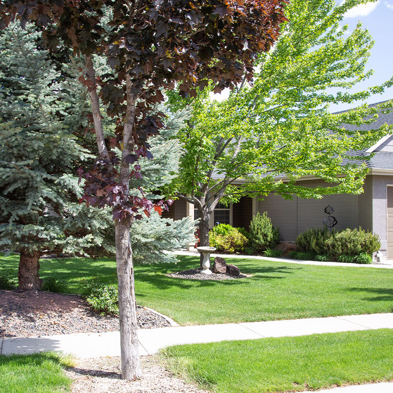 Three trees on a well-manicured lawn, landscaping is part of Distinct's tenant services